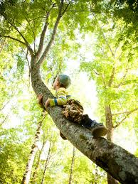 climbing_trees_youth_sports